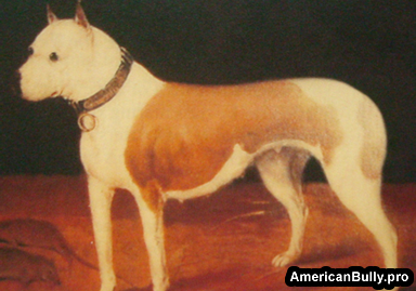 a brief history of the american kennel Brief history of the labrador retriever introduction to the labrador retriever according to the american kennel club (akc), the labrador retriever is in the class of sporting dogs they are considered a flushing dog that will retrieve downed game for their hunter master.