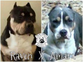 Raven X Amara