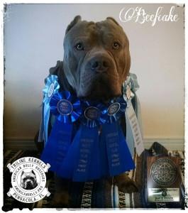 Champion Beefcake