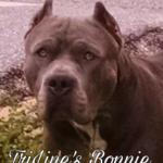 TriLine's Bonnie
