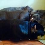 TriLine's Dogs