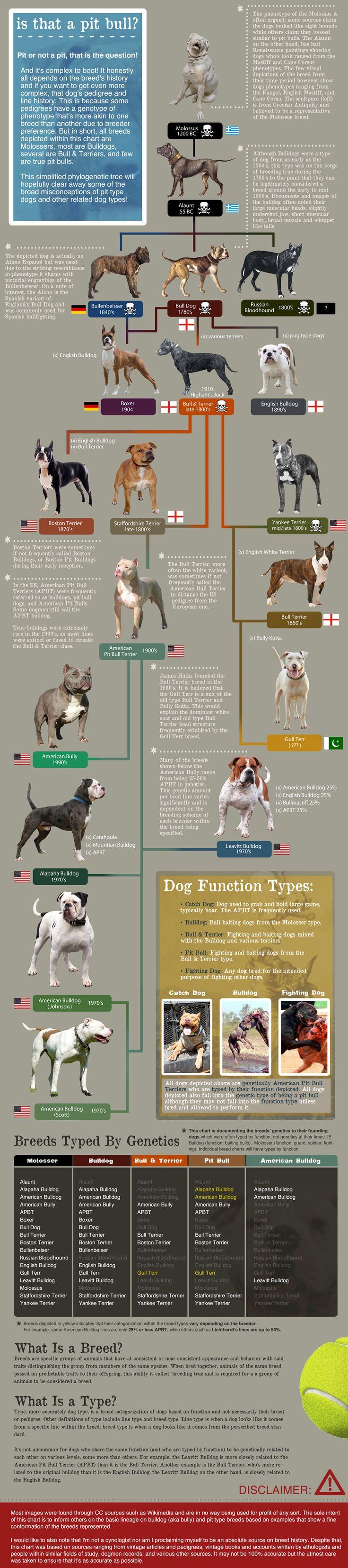 Ukc Dog Breed Standards