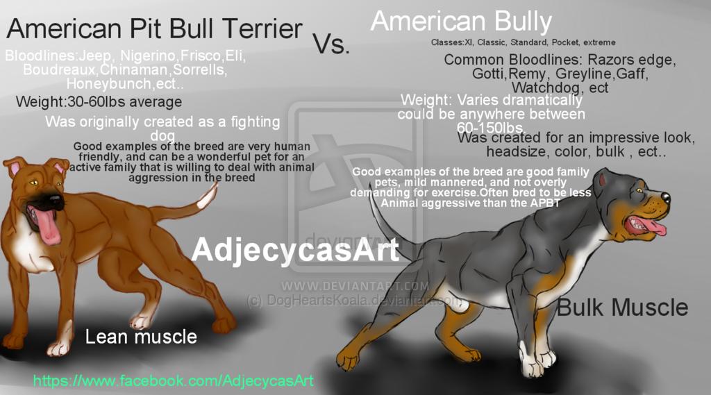 pitbull size chart: Pit bull vs american bully triline kennels